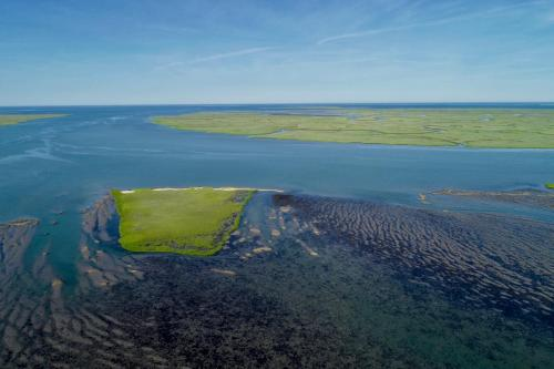 Salt marsh, mud flats, and seagrass meadow at the VCR -credit Castorani Lab